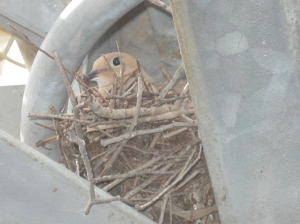 The Channel 2 Bird Protecting its Babies!