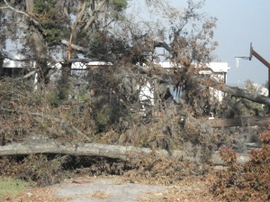 Fallen Trees and Personal Possessions
